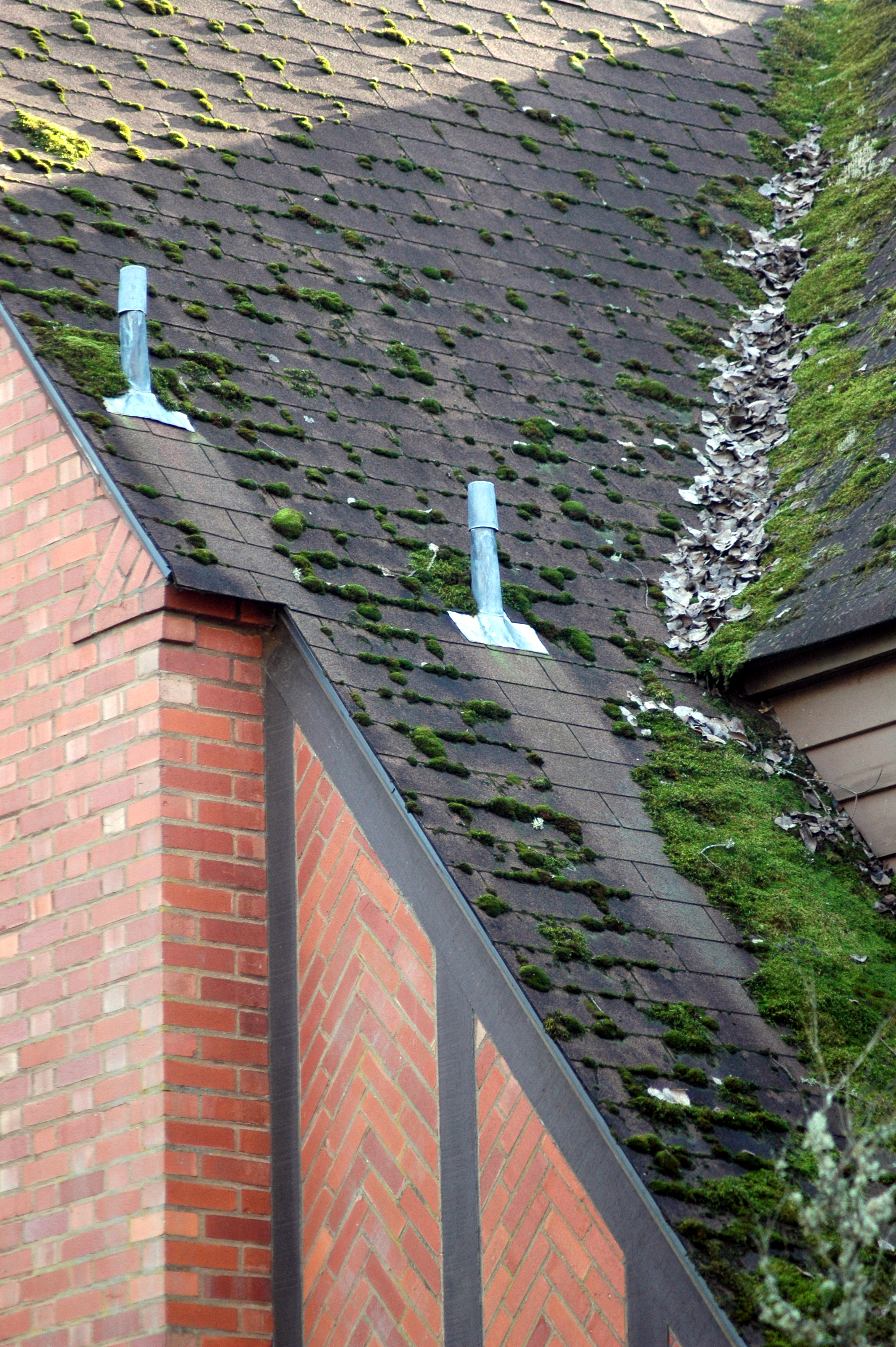 roof_moss_controled_by_flashings_dsc_0142.jpg